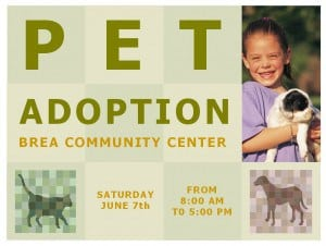 Pet adoption template